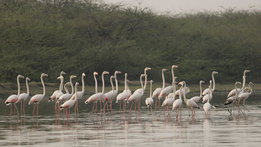 sur-sarovar-bird-sanctuary