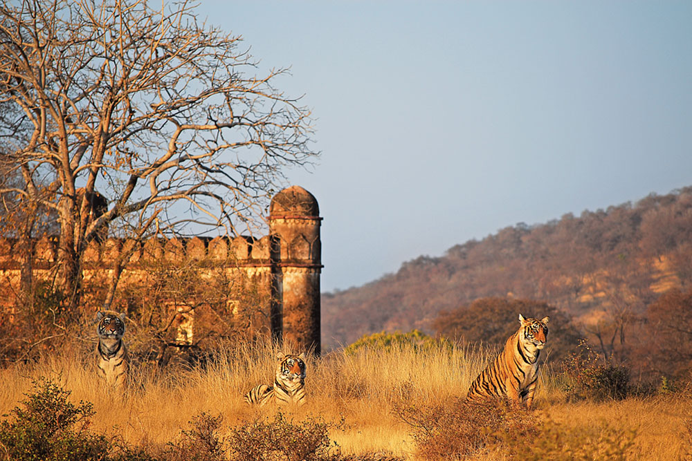 ranthambhore national park photography tour of northern india