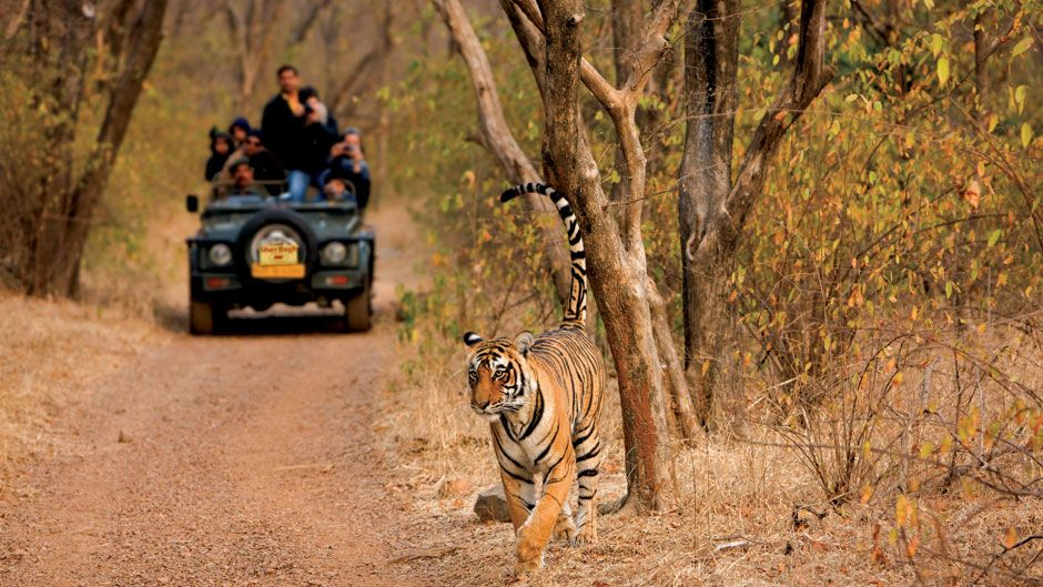 ranthambhore park photography tour of northern india